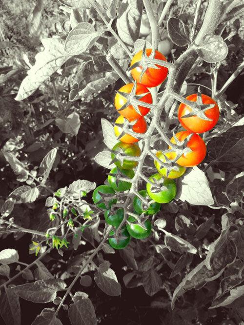 эволюция цвета да 1.jpg