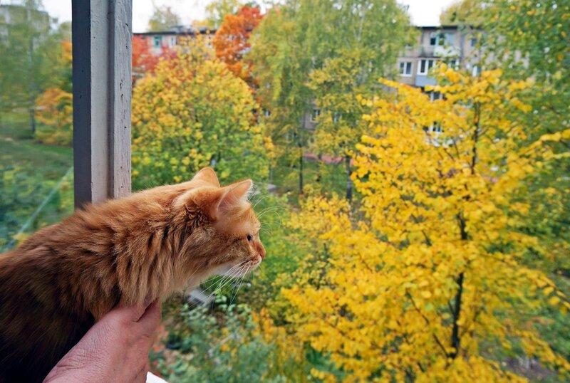 Ах, пусти меня в осень погулять...(2)