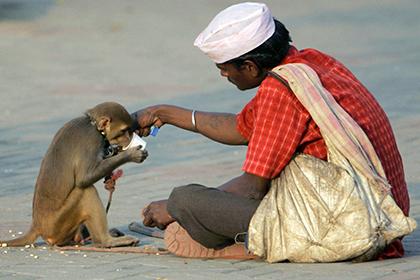 Из-за умершей обезьяны двести индийцев побрили себя наголо