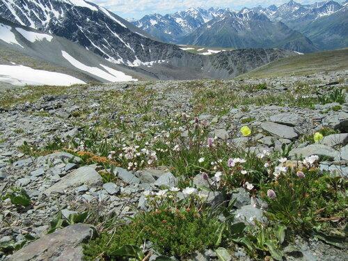 Альпийские горки даром 2