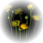 Flowers-130714_Mika.png