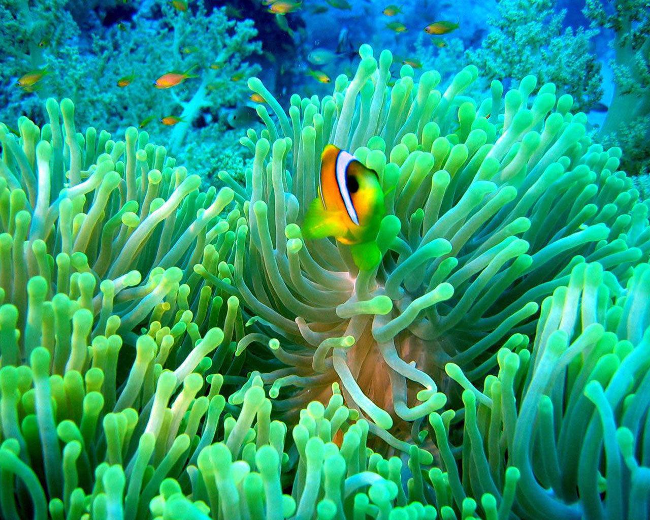 Подводные съемки, тропические рыбки, полипы, синий, бирюзовый цвет