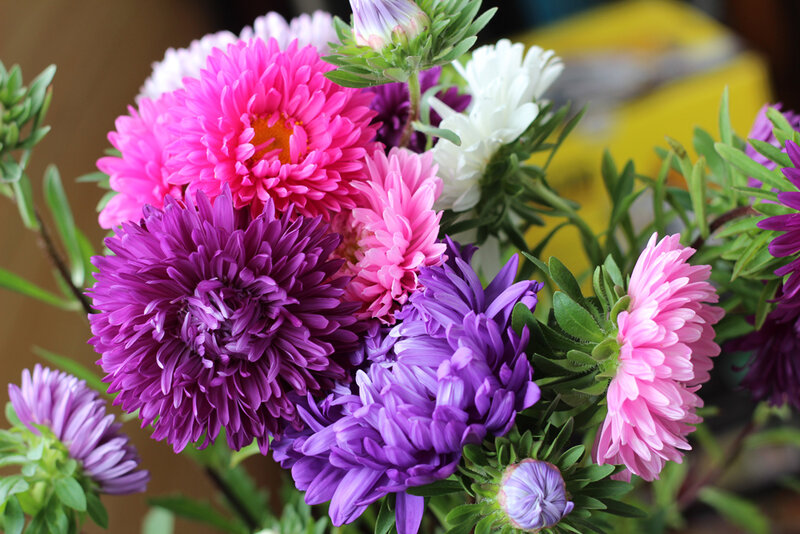 один картинки букет астр цветы стар чересчур увлекается