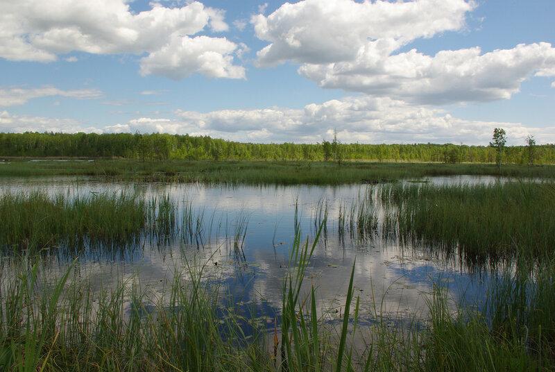 Галкинское болото