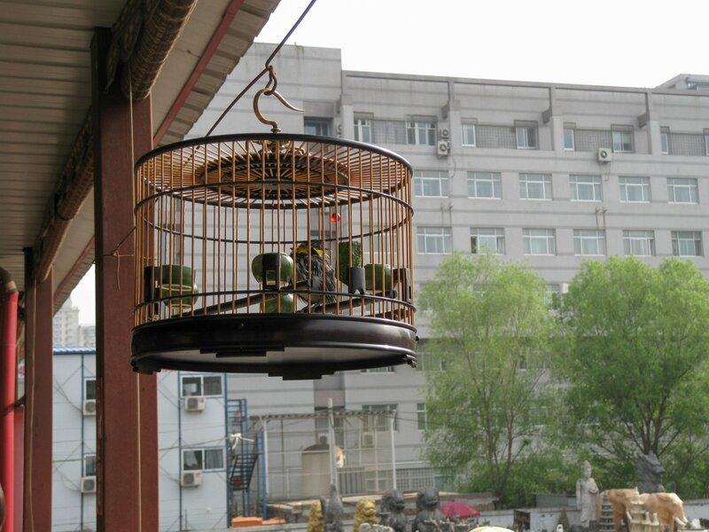Птичка в клетке, рынок Паньцзяюань, Пекин