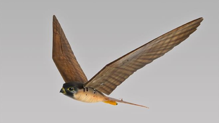 Отганялка птиц