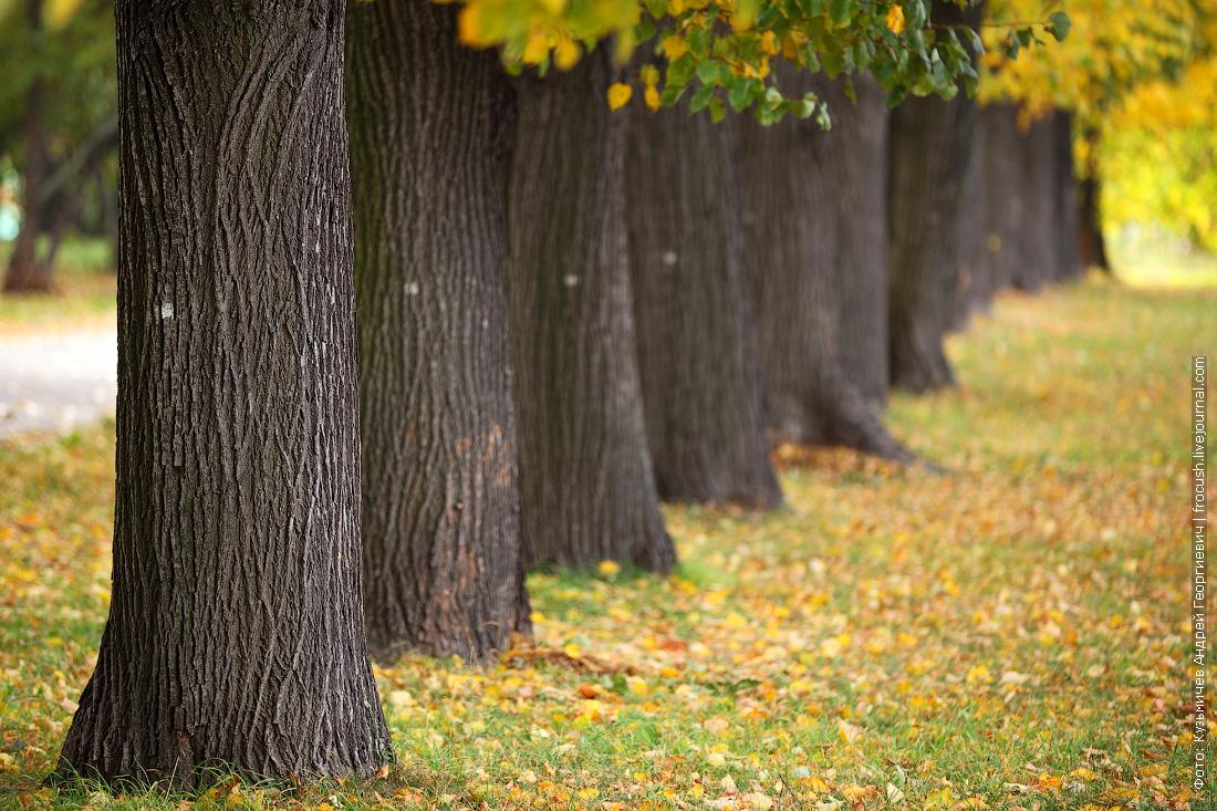 осень в парке Северного речного вокзала Моквы
