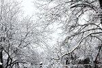 Снег (3).jpg