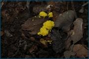http://img-fotki.yandex.ru/get/6832/15842935.145/0_d0c4d_33318b40_orig.jpg