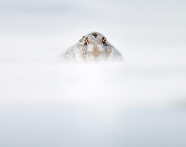 100 самых красивых зимних фотографии: пейзажи, звери и вообще 0 10f5cd 3df5d0c1 orig