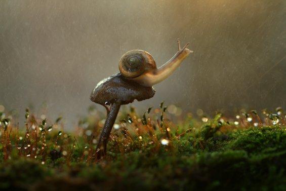 """Восьмой фестиваль фотографий b50дикой природы """"Золотая черепаха"""". Лучшие фото года"""