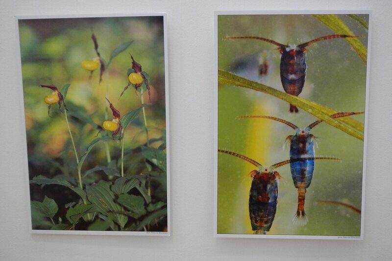 Фото 1 - Венерин башмачок. Фото 2- циклопы. Фотограф Николай Шпиленок. Фестиваль дикой природы Золотая Черепаха.