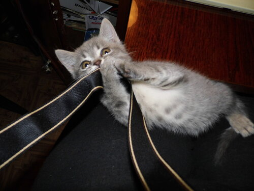 Баька поедает шнур от фотоаппарата