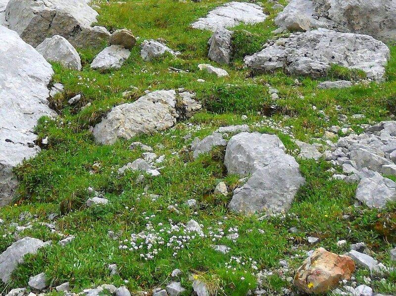 Камни и травы