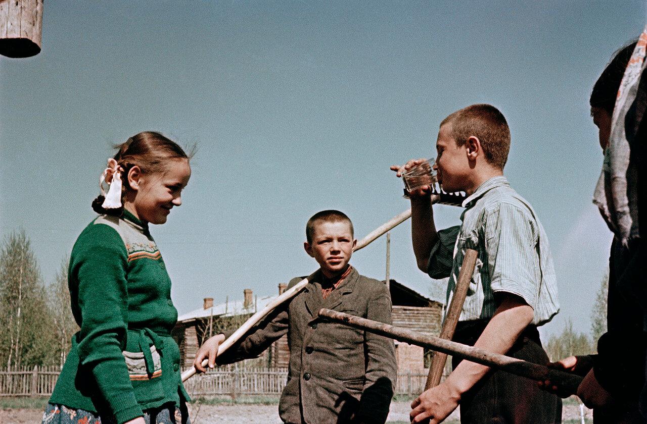 Новосибирская область, школьный участок юннатов Нижне-Чемской средней школы в селе Огурцово
