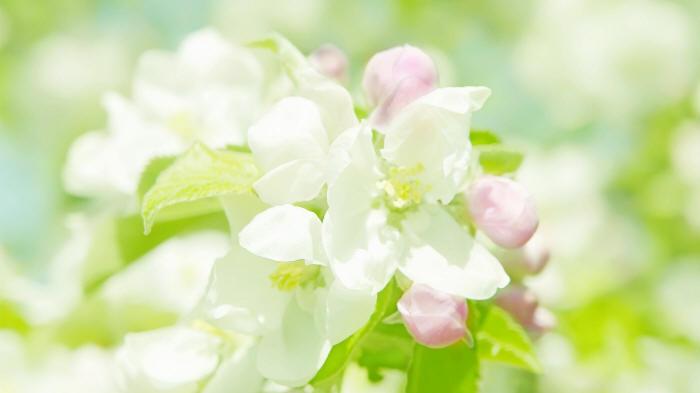 весняні шпалери