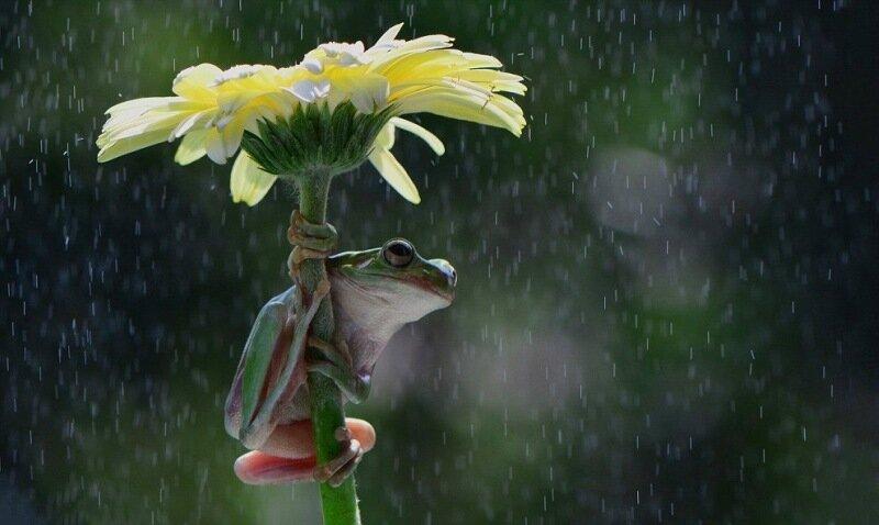Фотографии, как животные и девушки прячутся от дождя. Репортаж из дикой природы