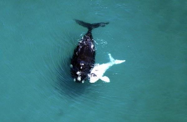 Великолепные киты