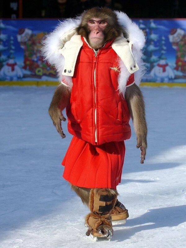 A monkey wearing a red winter coat enjoy