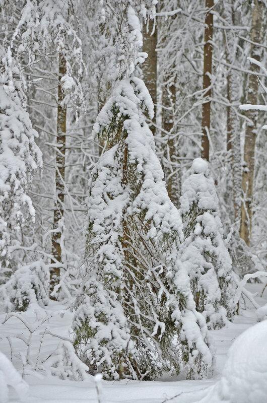 *  Зимний лес