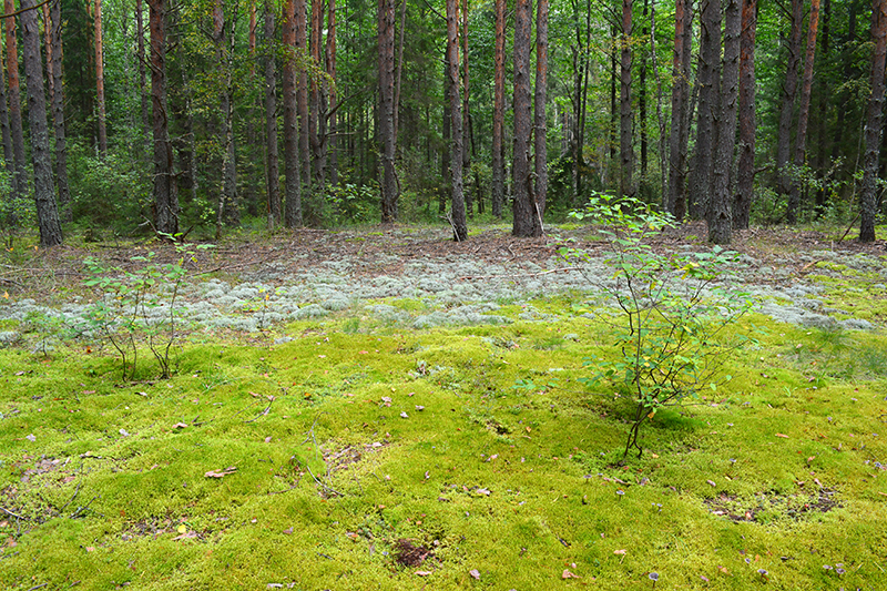 осень 15 лес2