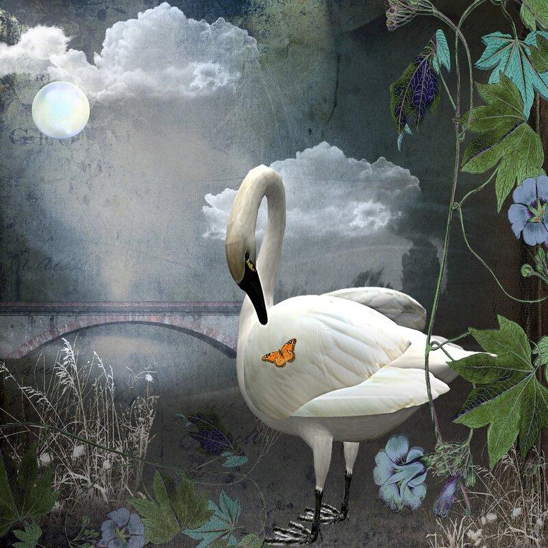Curious Swan.jpg