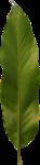 ldw_UnderPalmTree_leaf2.png