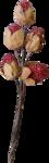 MagicalReality_VinMem1_old red berries.png