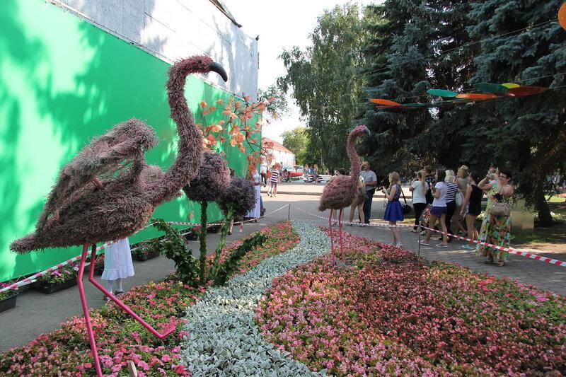 Флора, Омск