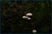 http://img-fotki.yandex.ru/get/6833/15842935.13f/0_d0926_9ee85449_orig.jpg
