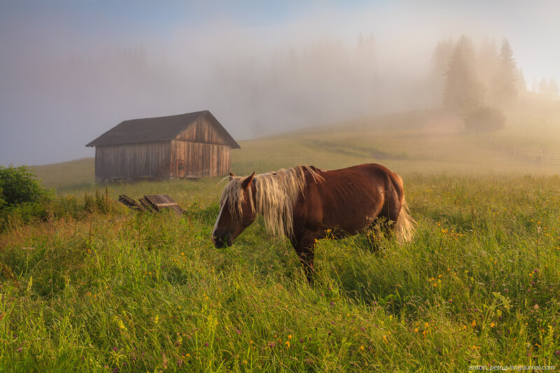 Лошадь. Карпаты