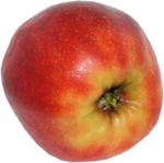 wendyp_autumnflavors_apple1.png