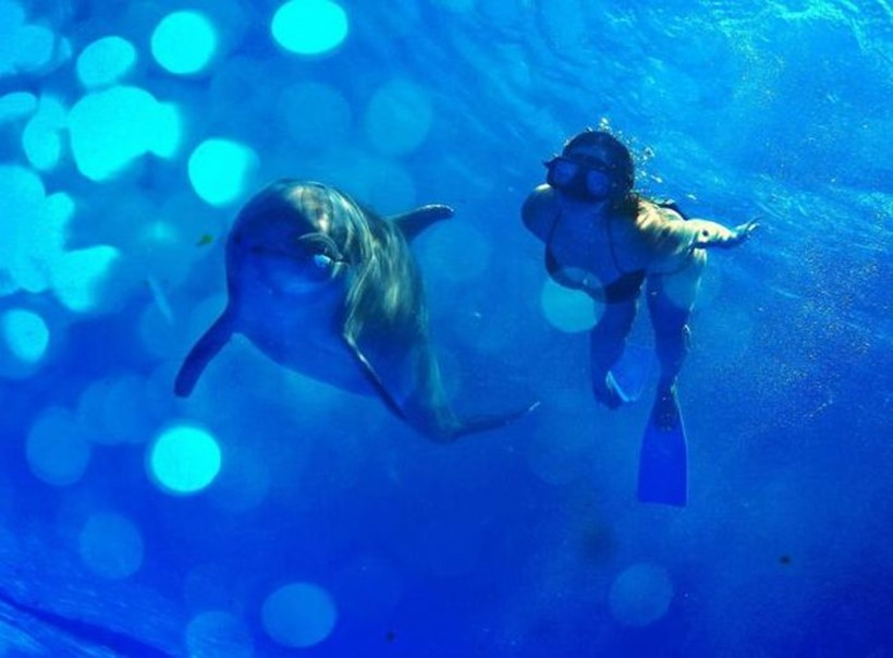 Беременная женщина и дельфин акушер 0 12e245 cc5d65e9 orig