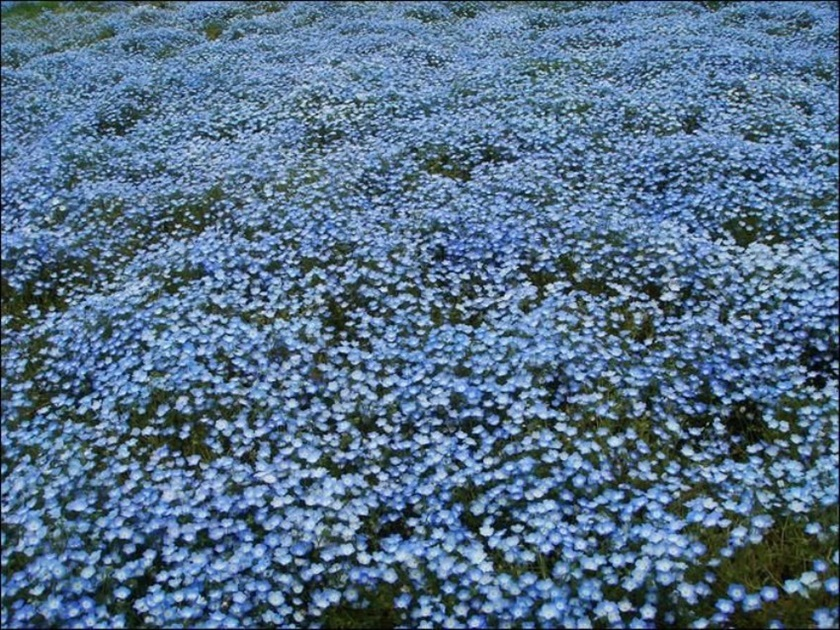Живописный японский парк Хитати Кайхин 0 1422c4 e28c2d57 orig
