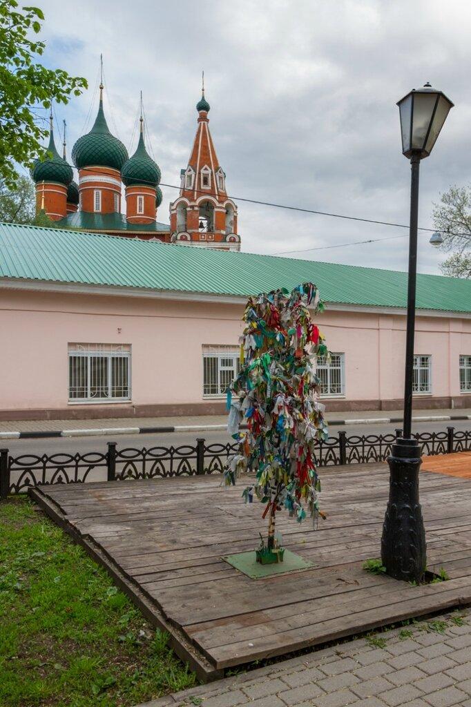 Дерево с ленточками и храм Михаила Архангела, Ярославль
