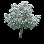 Зелёное дерево