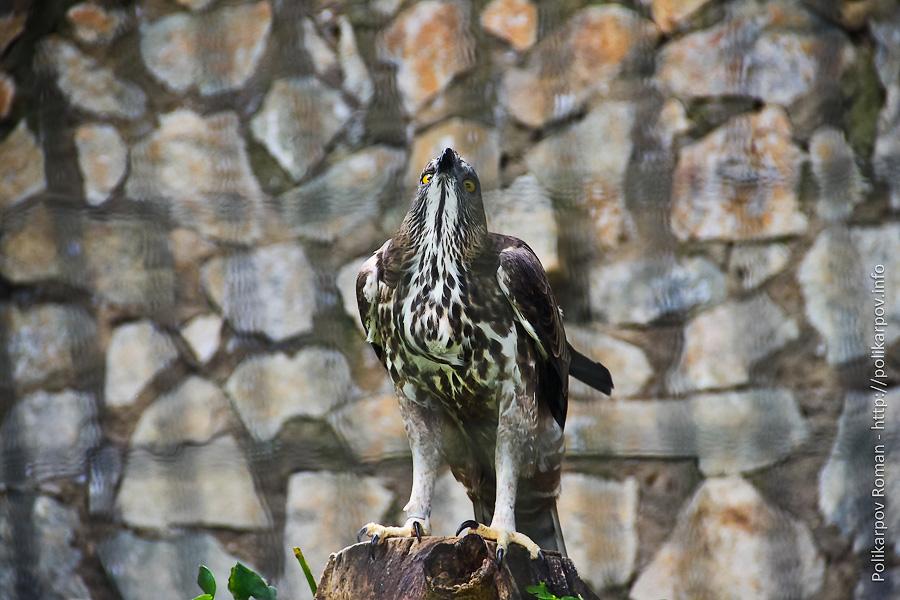 0 c4fd1 22a8b5e2 orig Парк птиц Jurong в Сингапуре