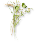 meadowbut_cluster6 (4).png