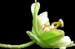 Lemony-freshness_elmt (29).png