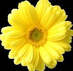 Lemony-freshness_elmt (88).png