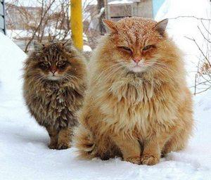 Деловые коты в снегу