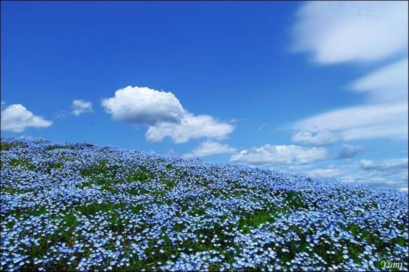 Живописный японский парк Хитати Кайхин 0 1422c8 8466dee7 orig