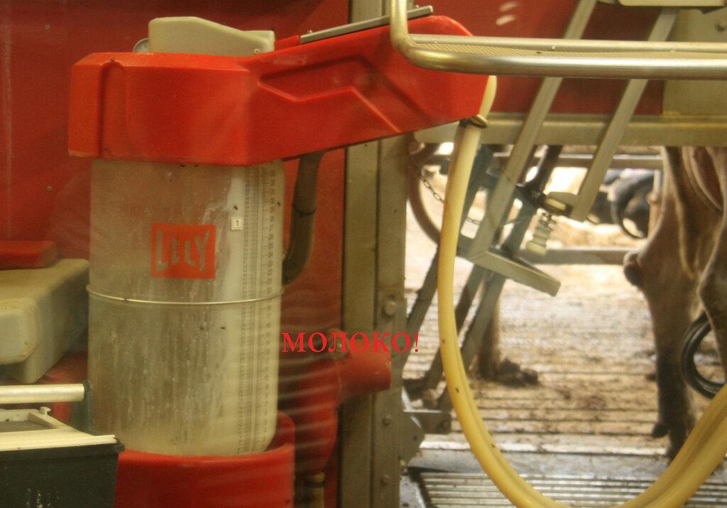 Из хуя чечёт молоко фото 684-145