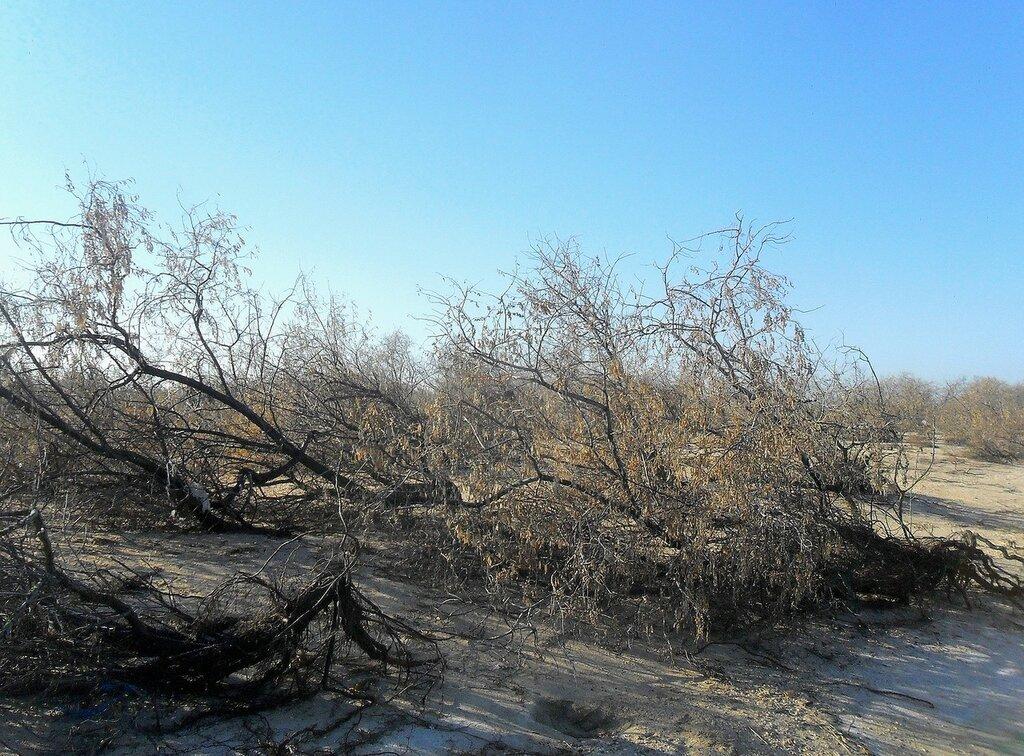 Ветви ... SAM_4532.JPG