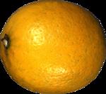 цитрусы (65).png