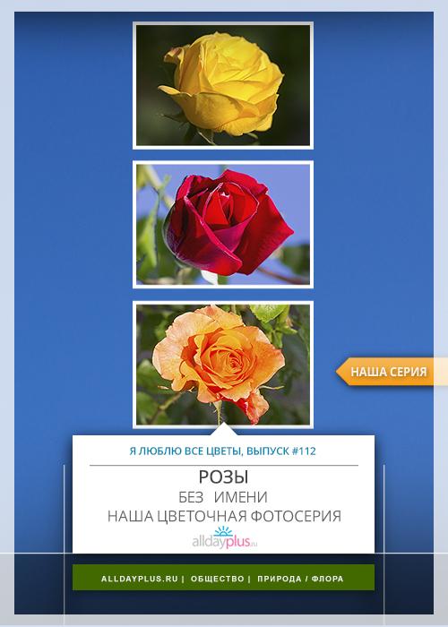 Я люблю все цветы, выпуск 112 | Розы без имени.