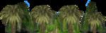 скалы пальмы.png