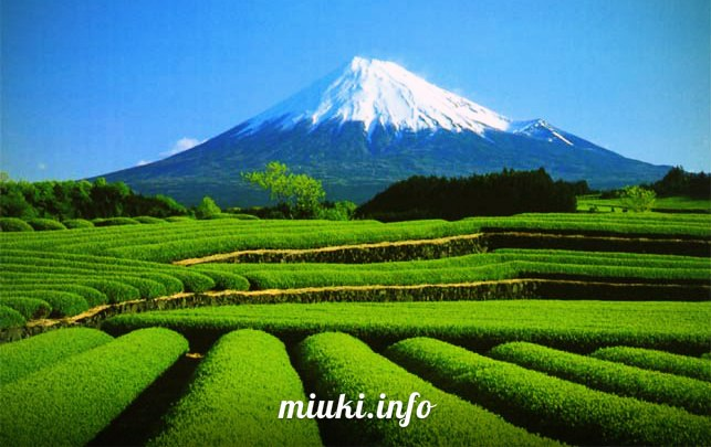 Япония - страна контрастов