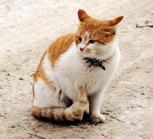 Котишка переживает