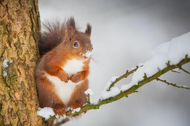 100 самых красивых зимних фотографии: пейзажи, звери и вообще 0 10f5d4 33cd2dc7 orig